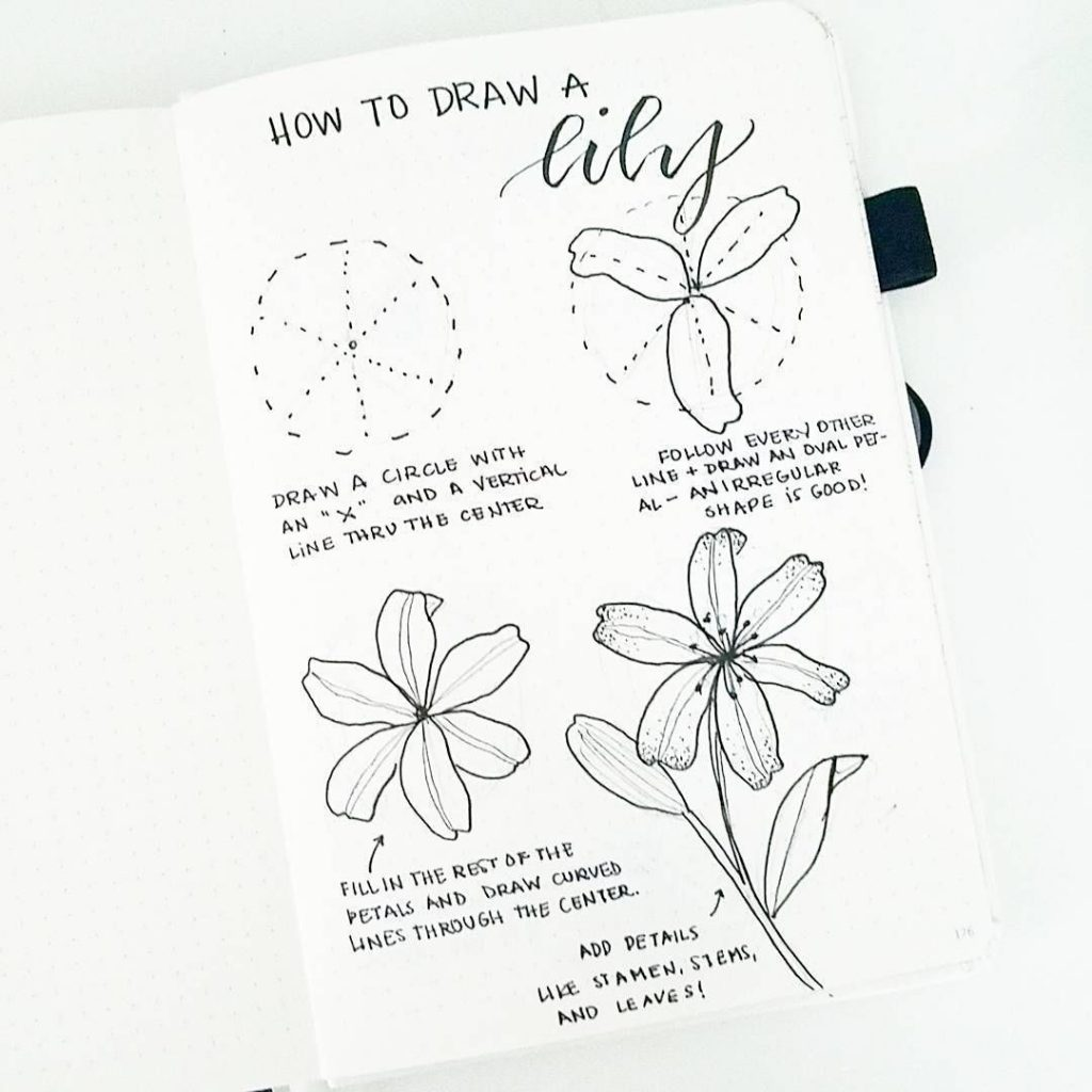 How to draw a lily in a bullet journal.